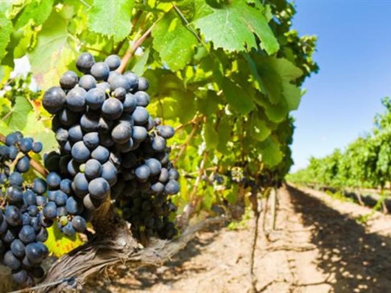 The Congressional Wine Caucus promotes the interests of America's wine industry from grape to glass.